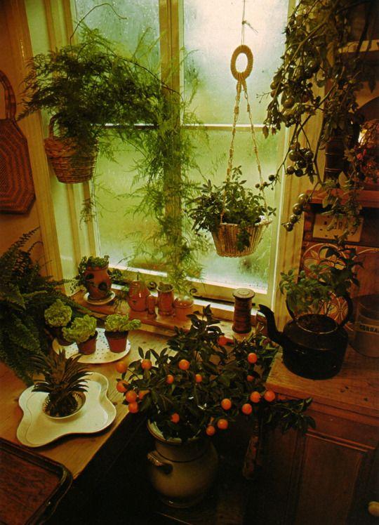 The Complete Book of Houseplants & Indoor Gardening, 1979 C