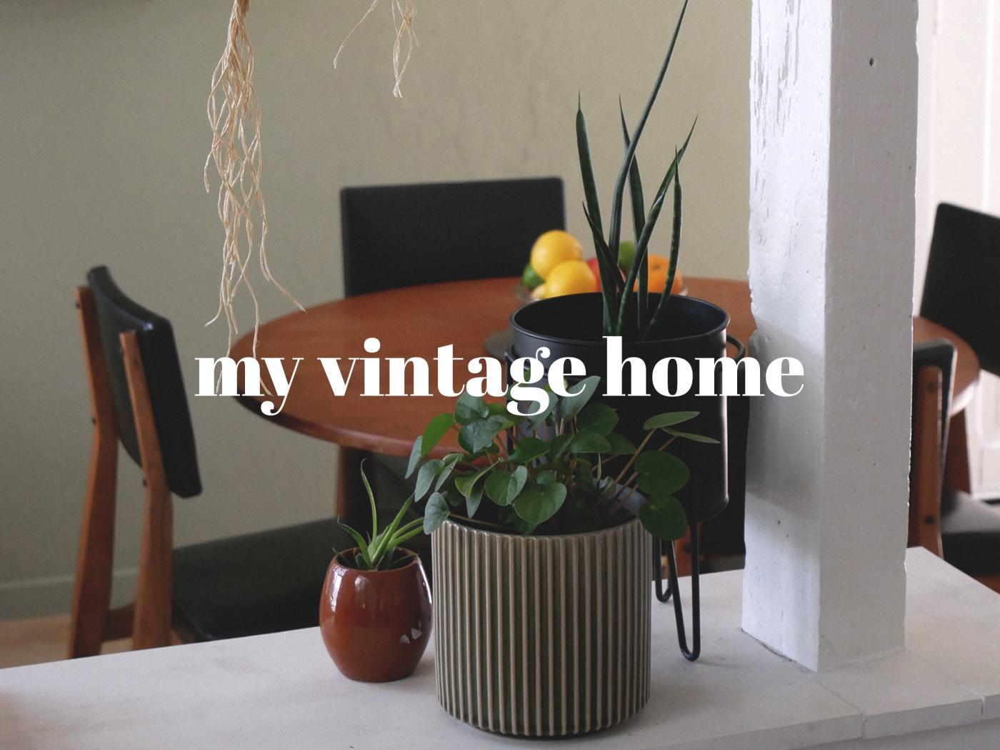 cat vintage home